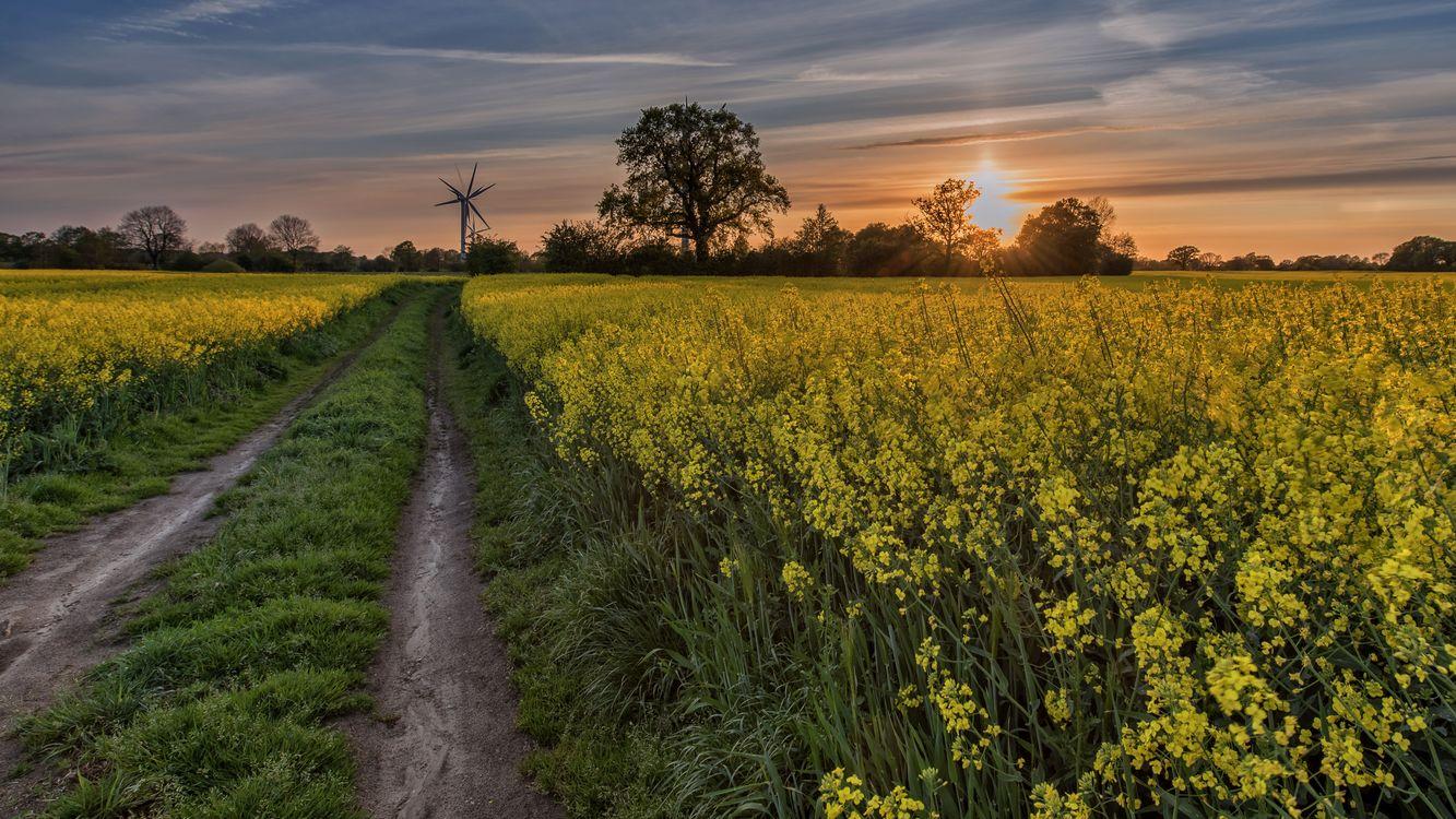 Фото бесплатно закат, поле, дорога, цветы, деревья, пейзаж, пейзажи