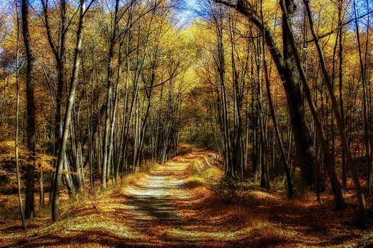 Photo free forest path, road, landscape