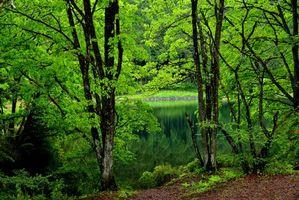 Бесплатные фото парк, лес, деревья, водоём, пейзаж