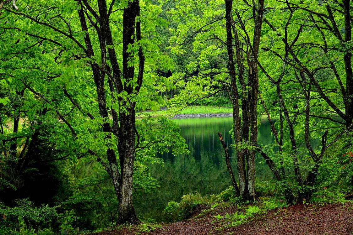 Заставки на тему пейзаж, деревья