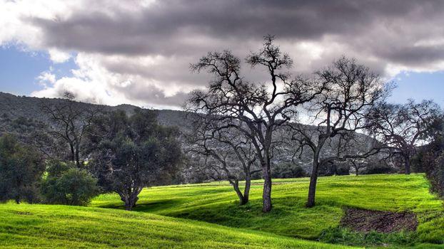 Фото бесплатно зеленый, облака, деревья