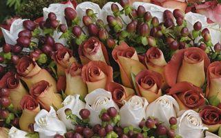 Бесплатные фото букет, розы, лепестки, бутоны, цветочки, композиция