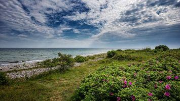 Бесплатные фото Балтийское море,берег,цветы,пейзаж