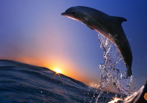 Фото бесплатно дельфин, прыжок из моря
