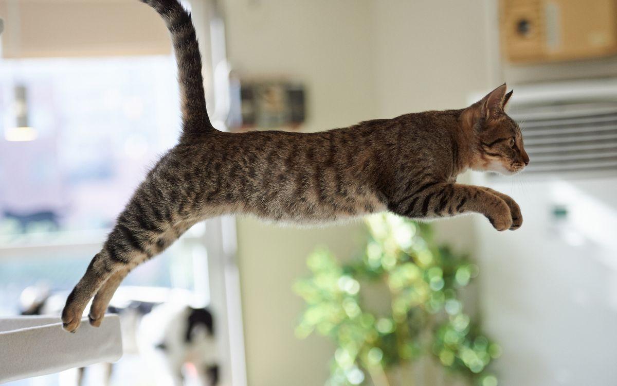 Фото бесплатно кот, стол, прыжок, кошки