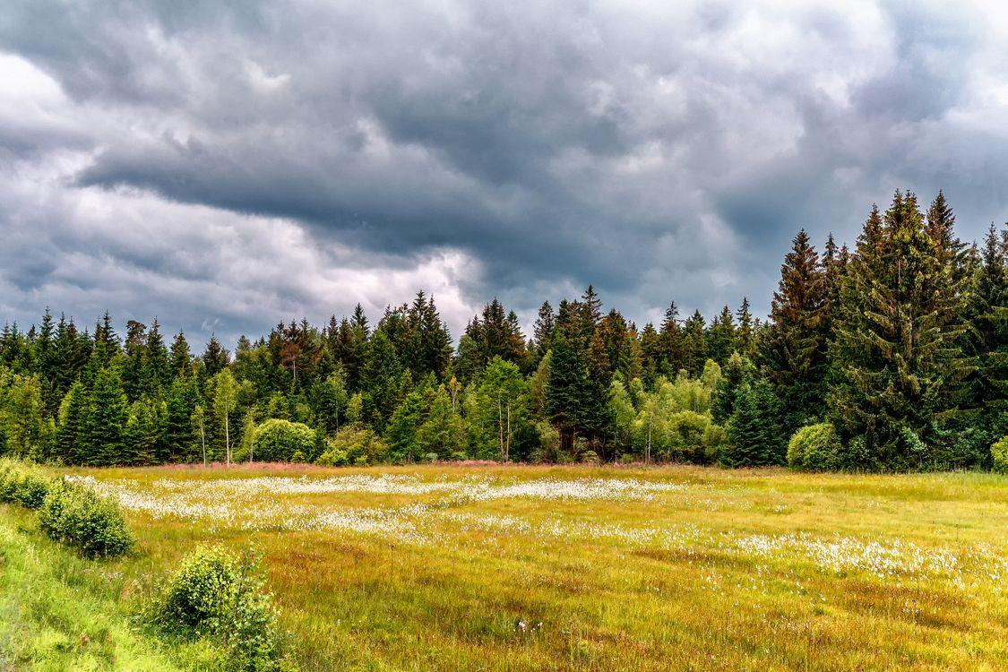 Фото бесплатно поле, деревья, пейзаж - на рабочий стол