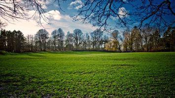 Фото бесплатно поле, трава, деревья, ветви, небо, облака