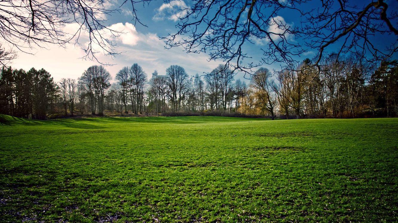 Фото бесплатно поле, трава, деревья, ветви, небо, облака, природа - скачать на рабочий стол