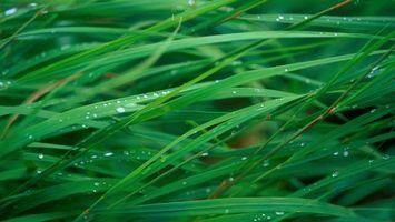 Бесплатные фото трава, роса, капли, макро