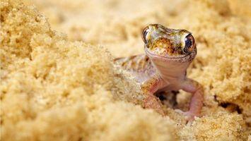 Обои ящерицв, морда, глаза, лапы, песок, желтый