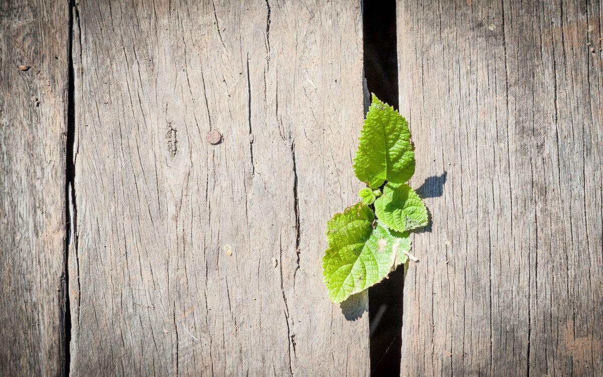 Фото бесплатно доски, листья, растут - на рабочий стол