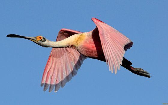 Фото бесплатно лапы, клюв, крылья