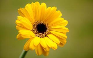Бесплатные фото цветок,лепестки,желтые,тычинки,пестики,стебель