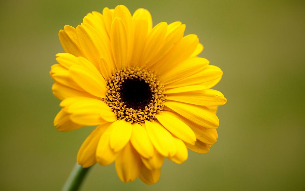 Free photo flower, petals, yellow - to desktop