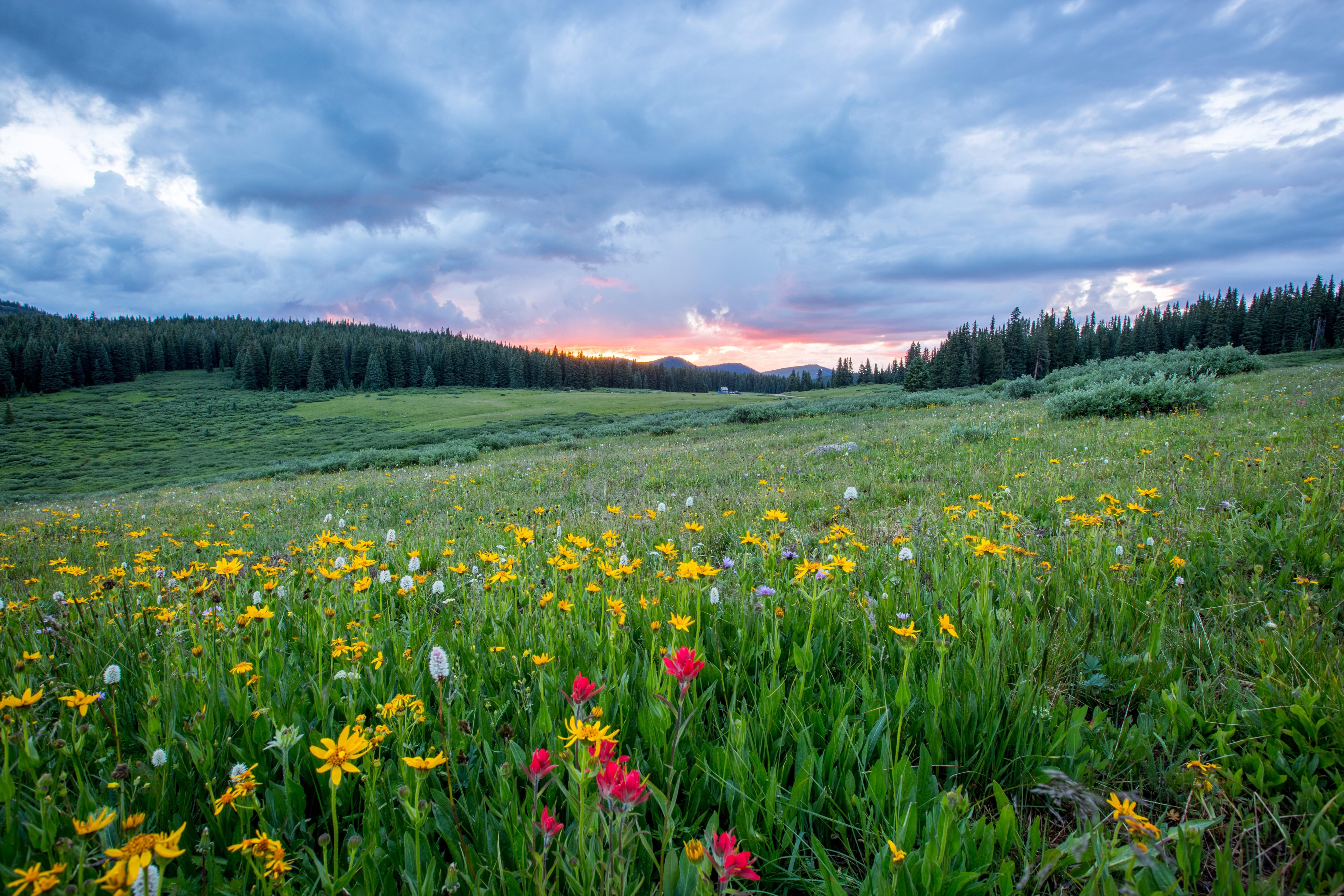 Обои закат, поле, холмы, цветы