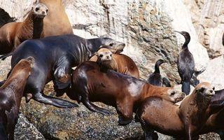 Бесплатные фото камни,лежбище,тюлени,морды,ласты,птицы