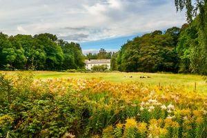 Бесплатные фото Альстер,Карлстад,Вермланда,Швеция,поле,цветы,деревья