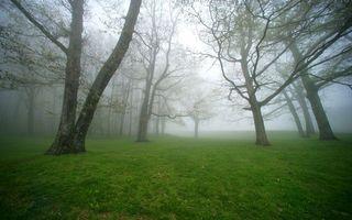 Бесплатные фото парк,трава,зеленая,деревья,ветви,туман