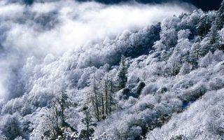 Бесплатные фото зима,горы,лес,деревья,иней,дымка