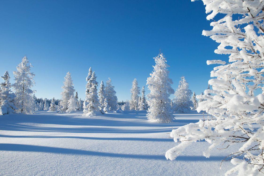 Фото бесплатно зимний лес, елки, сугробы, снег, природа