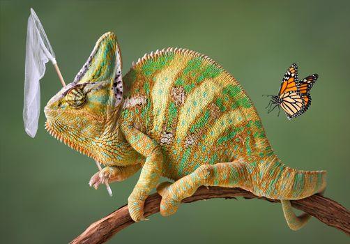Photo free chameleon, net, butterfly