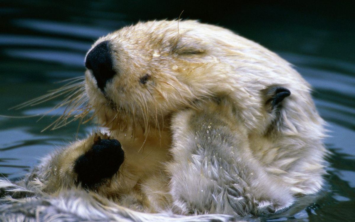 sea otter research paper