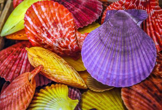 Фото бесплатно ракушки, разноцветные, крашеные