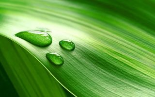 Обои трава, лист, зеленый, прожилки, капли, вода