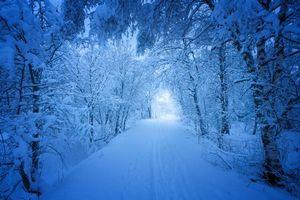 Бесплатные фото зима,снег,лес,деревья,сугробы,дорога,следы