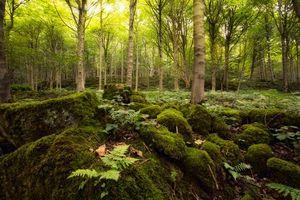 Бесплатные фото лес,деревья,камни,мох,природа