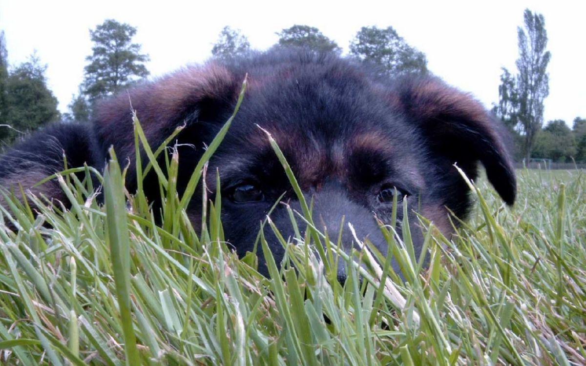 Фото бесплатно щенок, пес, пушистый, морда, глаза, шерсть, трава, собаки - скачать на рабочий стол