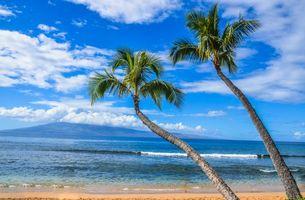 Бесплатные фото Kaanapali Beach,Maui,Hawaii,море,пальмы,берег,пляж