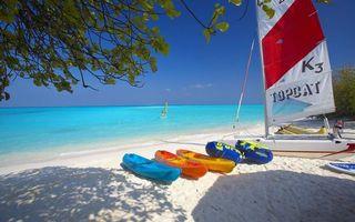 Photo free summer, shore, vegetation