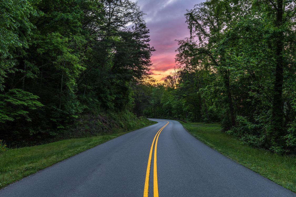 Обои Грейт Смоки Национальный парк, дорога, лес картинки на телефон