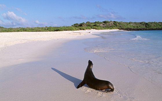 Фото бесплатно растительность, берег, морда