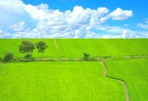 Бесплатные фото поле, трава, деревья, тропинка, пейзаж