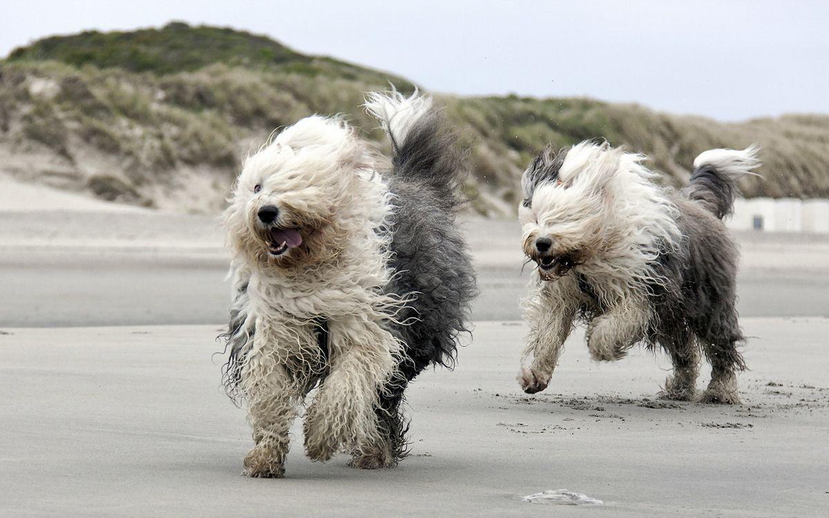 Фото бесплатно собаки, морды, лапы - на рабочий стол