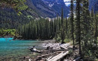Фото бесплатно река, берег, горы, елки