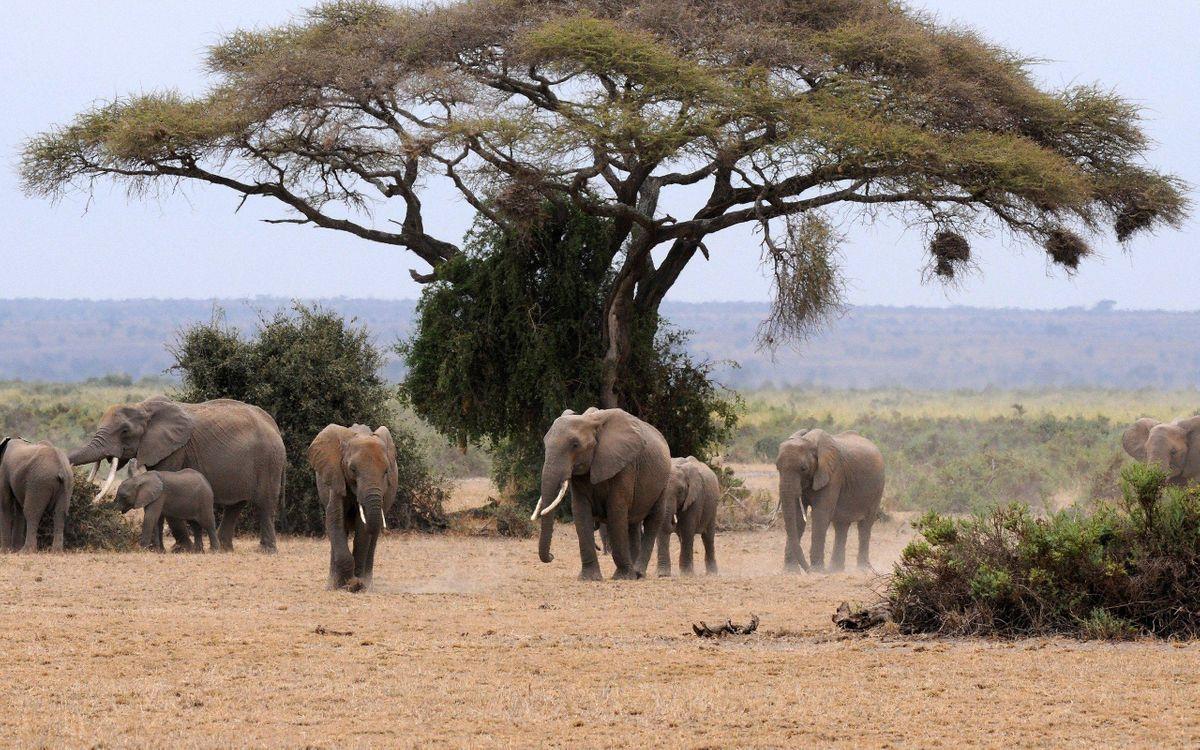 Обои Африка, слоны, семейство картинки на телефон