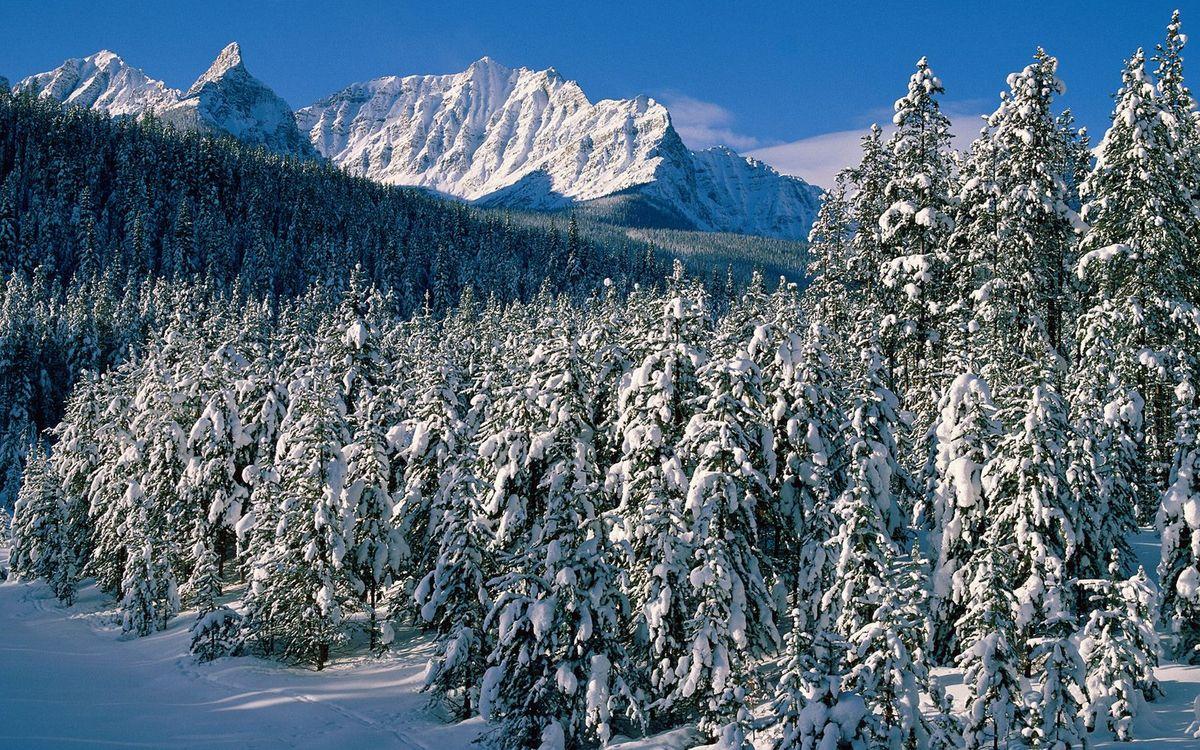 Фото бесплатно зима, горы, деревья - на рабочий стол