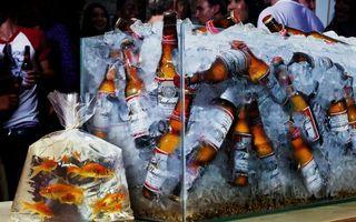 Бесплатные фото аквариум,пиво,бутылки,лед,пакет,рыбки,люди