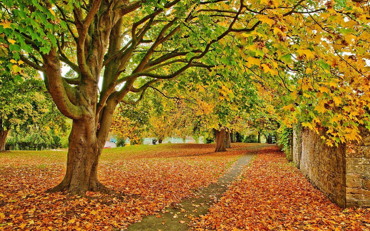 Free photo autumn, trees, foliage - to desktop