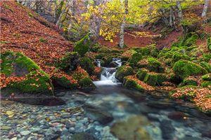 Бесплатные фото осень,лес,деревья,речка,водопад,природа
