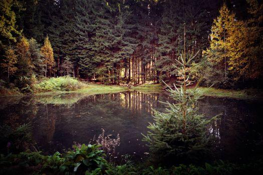 Фото бесплатно озеро в лесу, деревья, елки