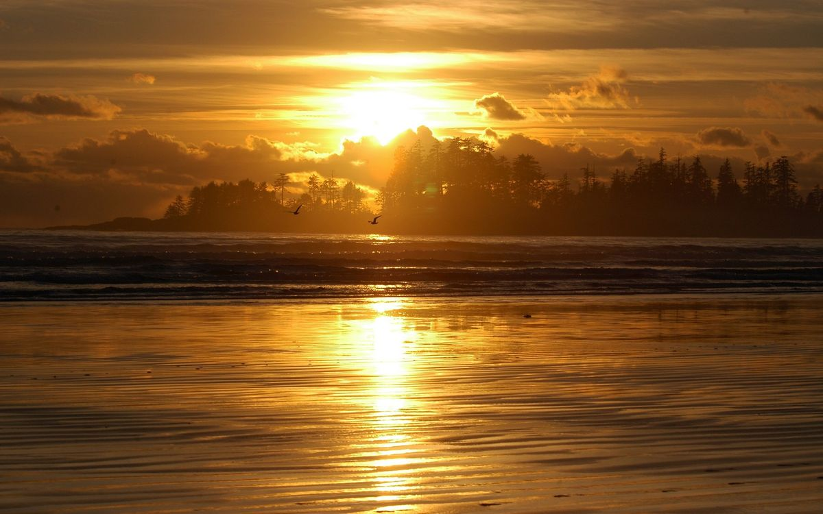 Фото бесплатно вечер, река, птицы, деревья, небо, солнце, закат, облака, пейзажи
