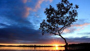 Бесплатные фото вечер, водоем, дерево, небо, солнце, закат, облака