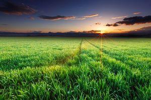 Фото бесплатно закат, поле, трава, небо, пейзаж