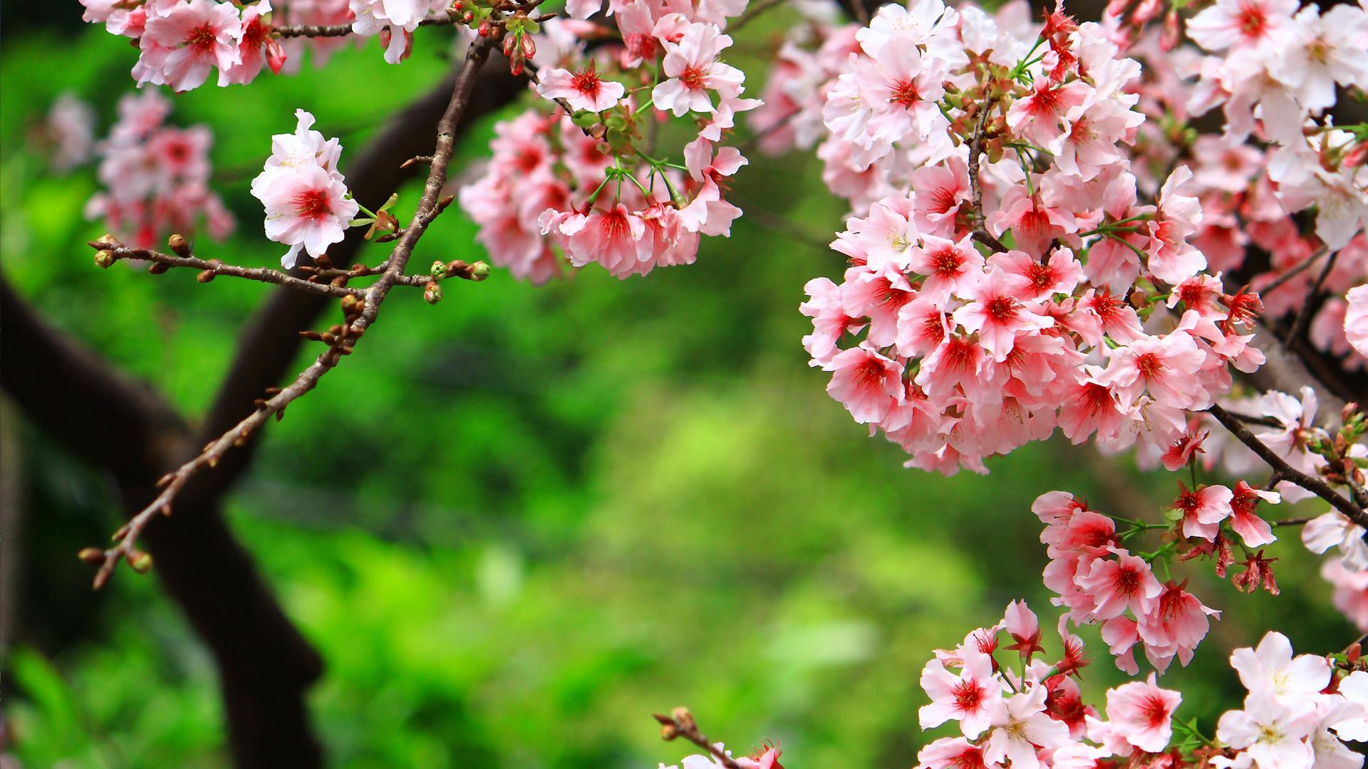 Весна деревья и цветы