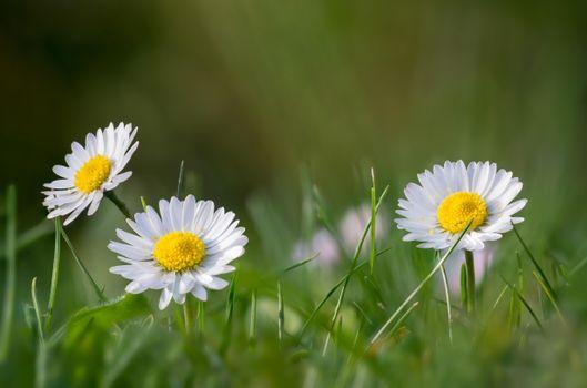 Заставки трава, цветы, макро
