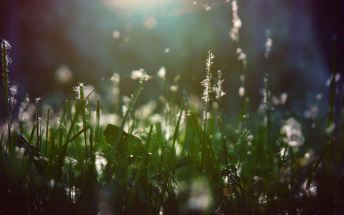 Фото бесплатно стебли, трава, пух - на рабочий стол